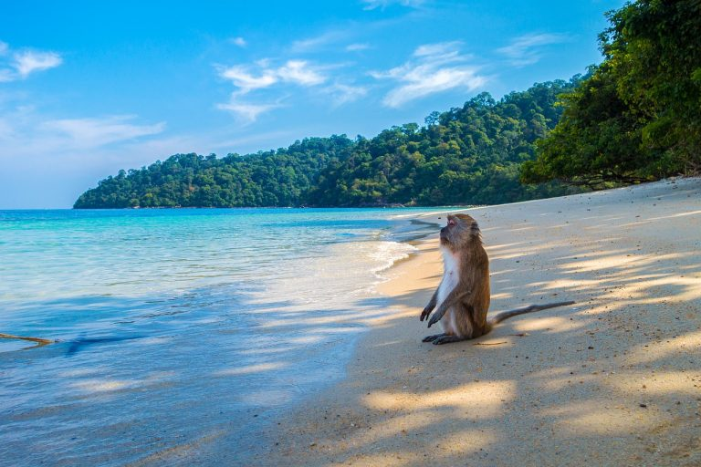 קוף על הים